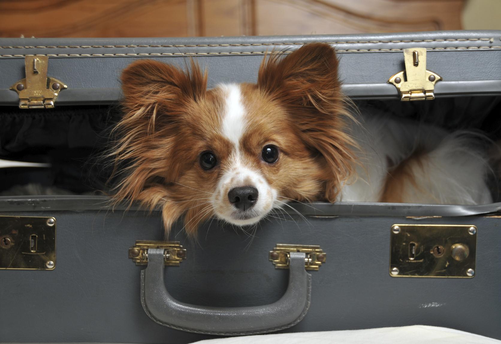 Что нужно для перевозки животных