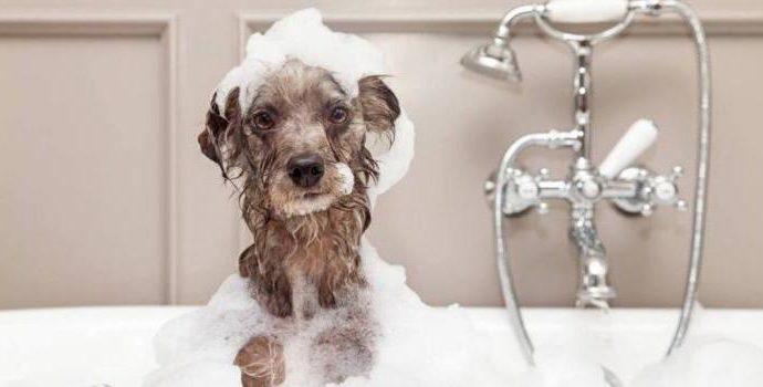 Как и чем мыть собаку
