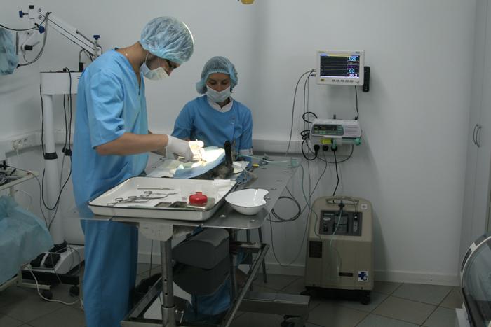 Vetclinika