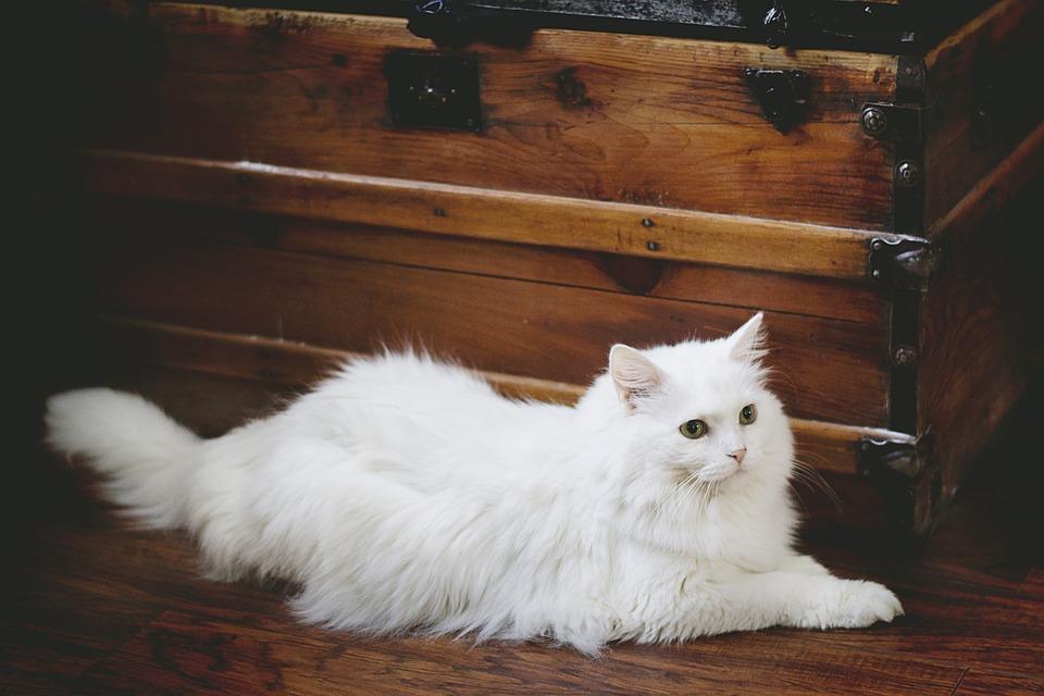 кошки как домашние животные