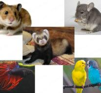 Экзотические домашние животные