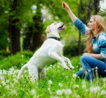Как самостоятельно дрессировать собаку