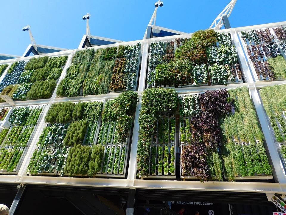 вертикальный сад как создать