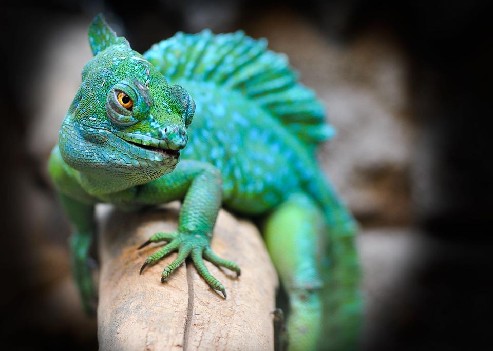 рептилии как домашние животные